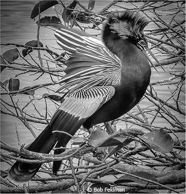 Bob_Feldman_Its A Bird_First Place_EOY Black and White_20180512