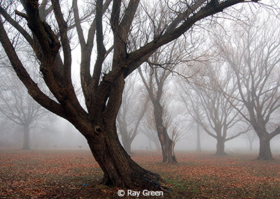 Ray_Green_Bent Tree in Fog_Third Place_EOY Color B_20180512