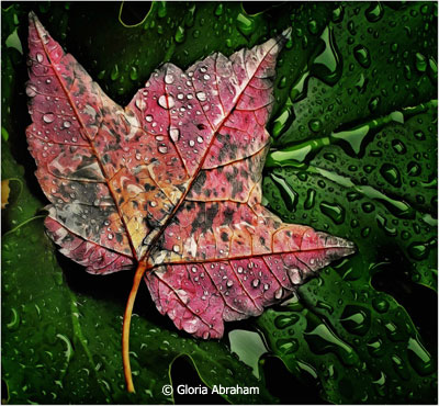 February-Color-Group-A_Abraham_Gloria_Leaf-after--the-rain