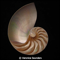 Veronica Saunders